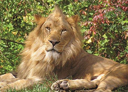 Springbok Puzzles Lion King Jigsaw Puzzle 100 Piece