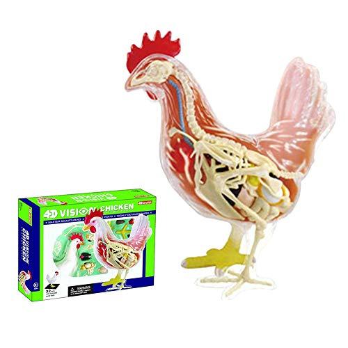 4D Vision Chicken Anatomy Model Animal Anatomy Toy Educational Anatomic Model Toy