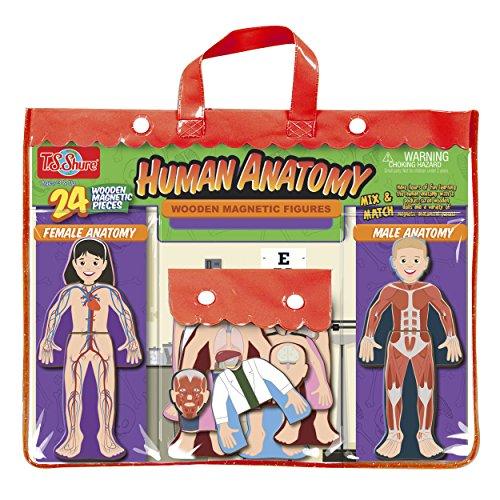 TS Shure Human Anatomy Wooden Magnetic Figures